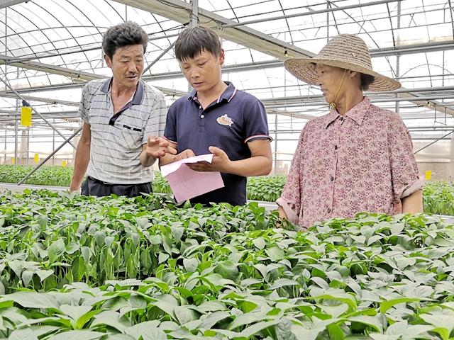 加大生产指导 保障菜苗供应
