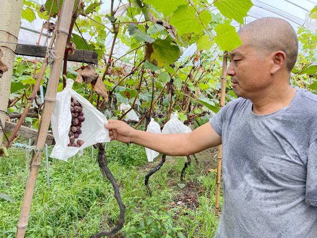 雨山区农民积极开展灾后自救